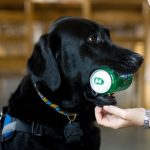 An image of an assistance dog
