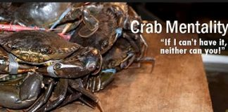 """An image of crabs in a bucket, with the text """"Crab mentality: if I can't have it, neither can you"""""""